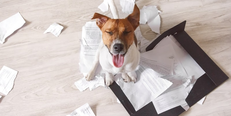 My dog ate my roster - and other reasons your employees are late