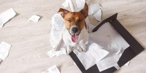 The dog ate my schedule (and other reasons employees are late for work)